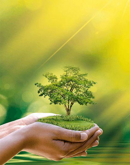 Plan 1000 arbres pour Cusset : demain prend racine